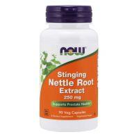 Stinging Nettle Root Extract - Pokrzywa Zwyczajna 250 mg (90 kaps.) NOW Foods
