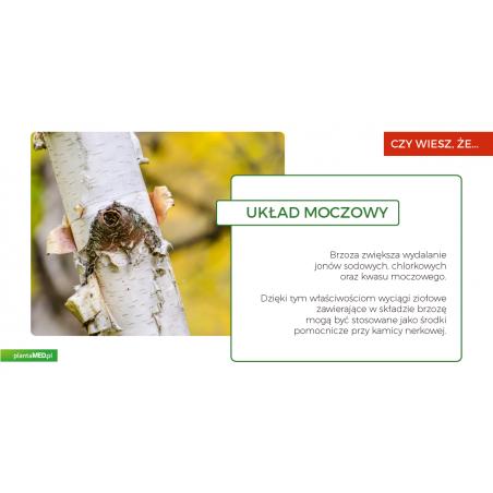 OrtoRen - ekstrakt ziołowy wspomagający układ moczowy (50 ml) Holistic